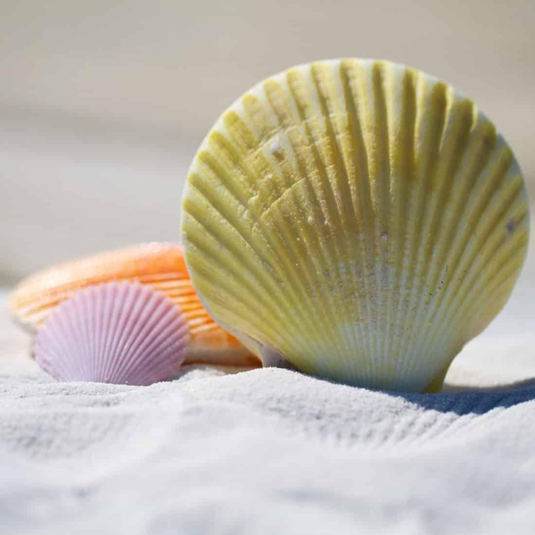 Muscheln Strand pixabay